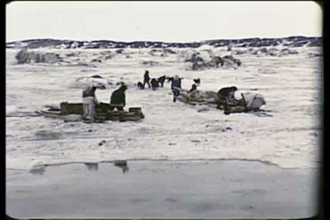 Eskimos in the Arctic move across the tundra using Footage