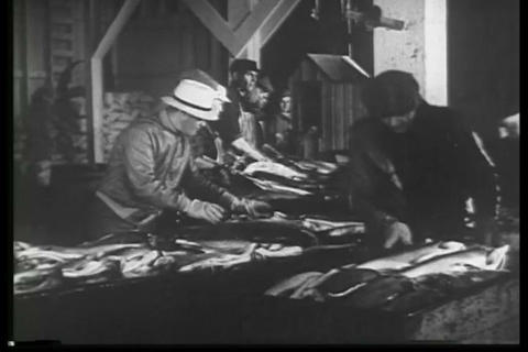 A fish processing plant in Alaska in 1932 Live Action