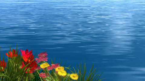 lake and flower Stock Video Footage