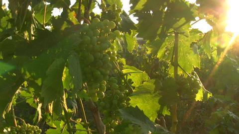 wine 02 Footage