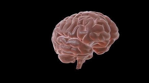 Brain spin Animation