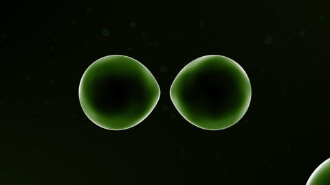 Multiplying Cells Stock Video Footage