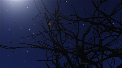 night stars 9 Stock Video Footage