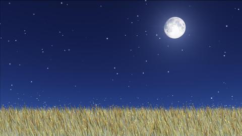 night stars 26 Stock Video Footage