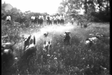 Toledo Ohio summer coon chases in 1930 Footage