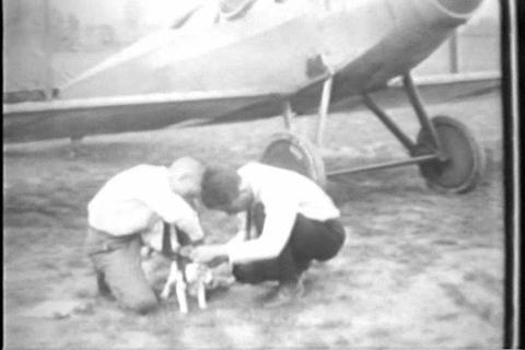 Winners of the National Cat Show in 1929 Footage