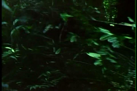 Rainforests are threatened with extinction by logg Footage