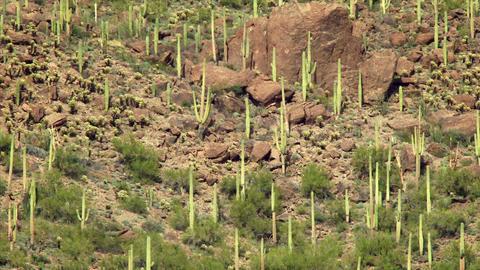 Desert Landscape Live Action