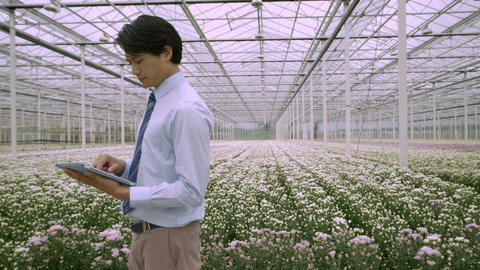 Businessman using digital tablet in greenhouse Footage