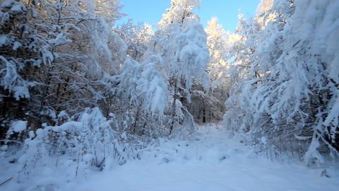 Beautiful winter landscape at sun Footage