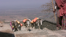 Donkeys And Women On Stairs In India stock footage