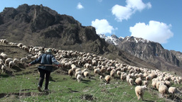 Herding sheep in Georgian mountains Footage