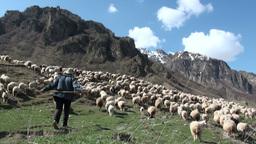 Herding sheep in Georgian mountains Footage