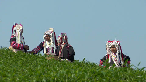 Blue Sky Tea Plantation stock footage