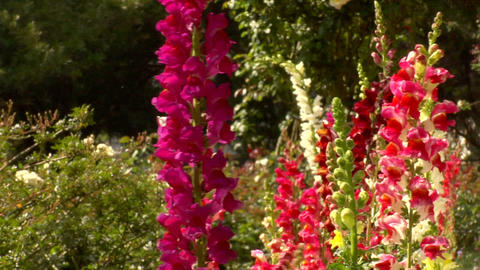 Flower Garden stock footage