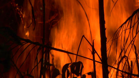 Forest Flames stock footage