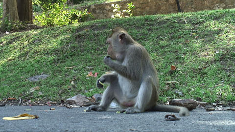 Monkey Eating Live Action