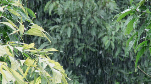 Monsoon Rain stock footage