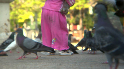 Pigeons And Child stock footage
