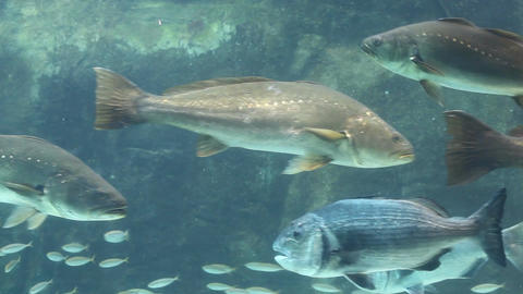 Aquarium Fish Display stock footage