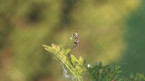 Spider Live Action
