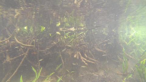 Aquatic plant Footage