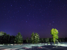 Stars over the winter forest. Time Lapse. 4x3 Footage
