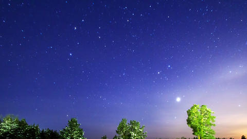 Stars fall in the forest. The camera follows them. Footage