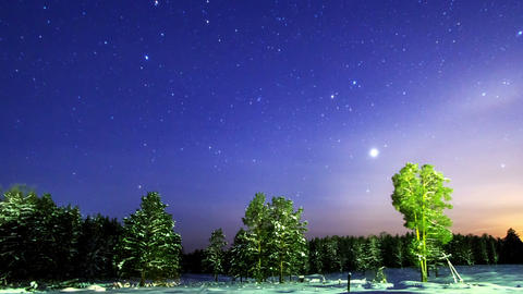 Stars over the winter forest. Time Lapse Footage