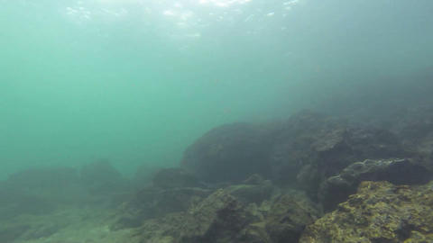 Sea coral reef at Isla Iguana, Panama. There are d Footage