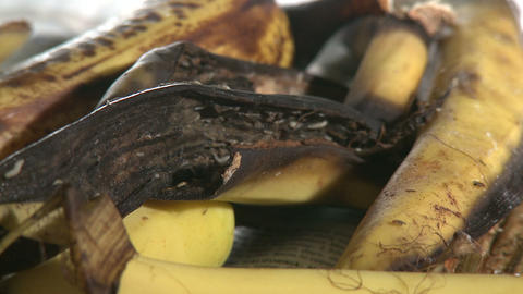 Maggots And Flies On Banana Peel stock footage