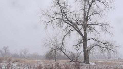 Trees in Heavy Snow Footage