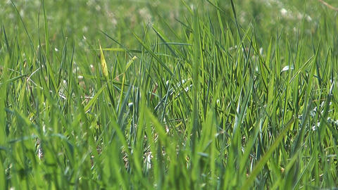 Spring Grass stock footage
