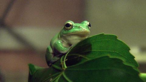 frog QHD 02 Footage