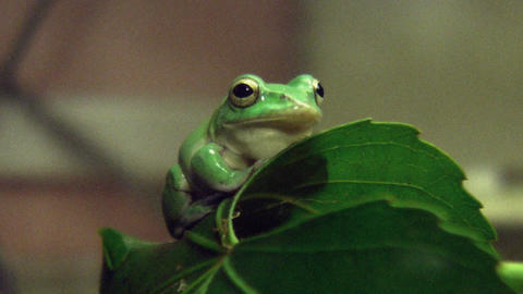 frog QHD 02 動画素材, ムービー映像素材