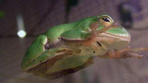frog QHD 04 Footage