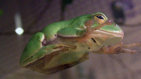 frog QHD 04 Stock Video Footage