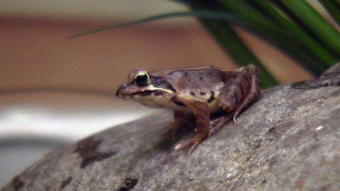 frog QHD 08 ビデオ