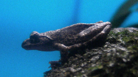 frog QHD 10 Stock Video Footage