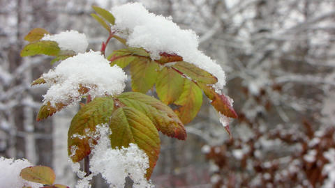 First snowfall 4 Stock Video Footage