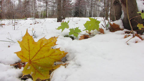 First snowfall 6 Stock Video Footage