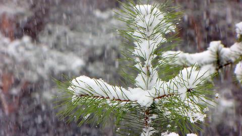 Snow 2 Stock Video Footage