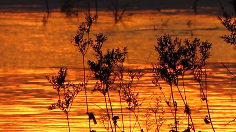 Sundown 29 Stock Video Footage
