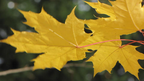 Autumn leafs 3 Stock Video Footage