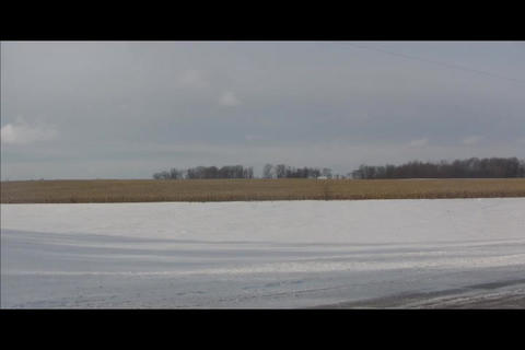 cornfield and forest in distance Stock Video Footage