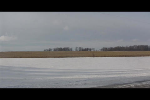 cornfield and forest in distance Footage