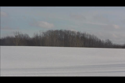 trees in distance Stock Video Footage