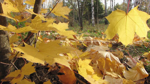 Autumn leafs 12 1 Stock Video Footage