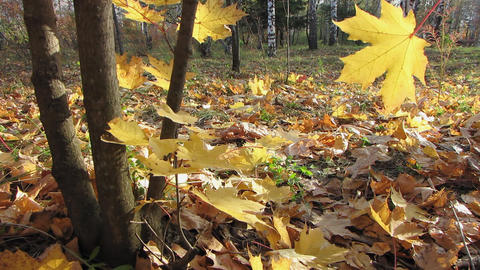 Autumn leafs 26 1 Stock Video Footage