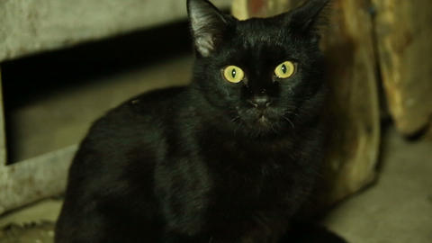 A Black Cat With Green Eyes stock footage